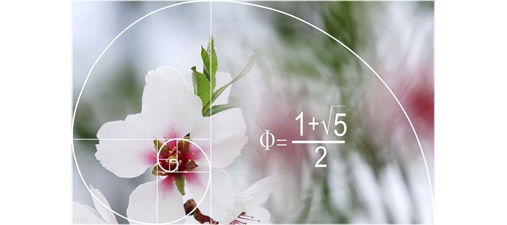 Gekend uit wiskunde: de spiraal van de gouden verhouding beïnvloedt onze waarneming van schoonheid.