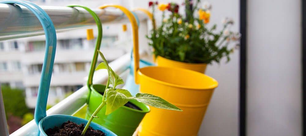 Planten en kruiden zien er niet alleen leuk uit, maar verspreiden ook een heerlijke geur