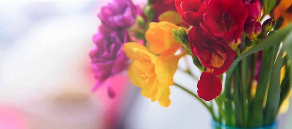Test kleurcombinaties met potplanten en snijbloemen