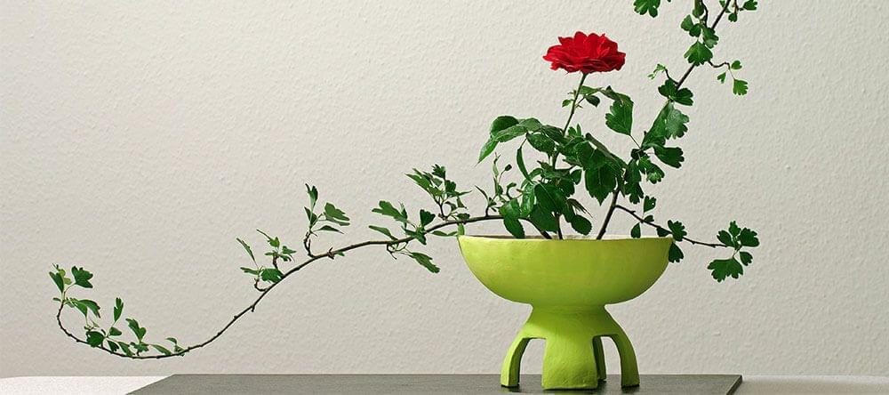 Coloca tus plantas en jarrones interesantes siguiendo un patrón tradicional