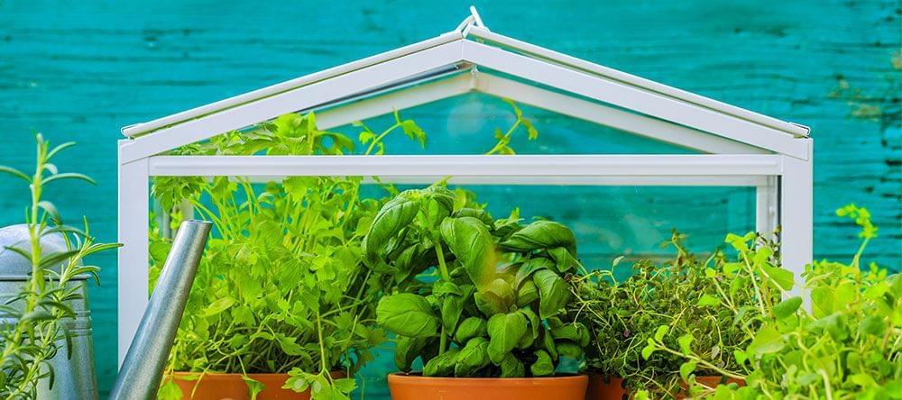 Los mini-invernaderos para tu apartamento son adecuados para acoger hierbas o paisajes florales decorativos
