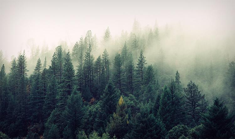 okologischer strom
